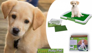 """""""Puppy Potty Pad"""" augintinio dėžutė – daugiau jokio kvapo ir balučių!"""