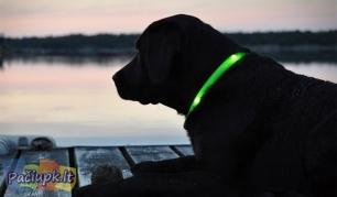Ryškiai šviečiantis, tvirtas ir patogus LED antkaklis šunims