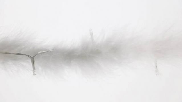 LED lempučių girlianda su plunksnomis, 210 cm